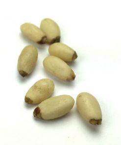 Raw Pinenuts