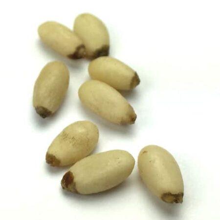 Raw Pinenuts 500g